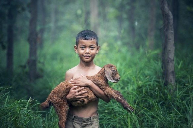 boy-goat-1807545_960_720