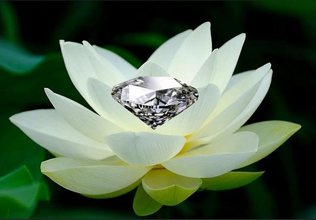 jewelinlotuspuritydiamondperfection