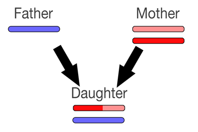 recombination2