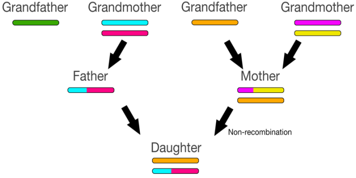 recombination4