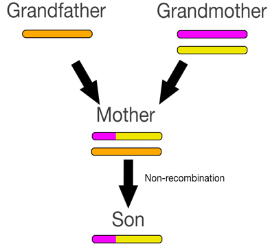 recombination5
