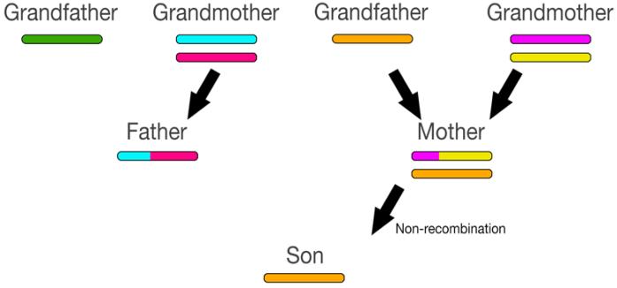 recombination8
